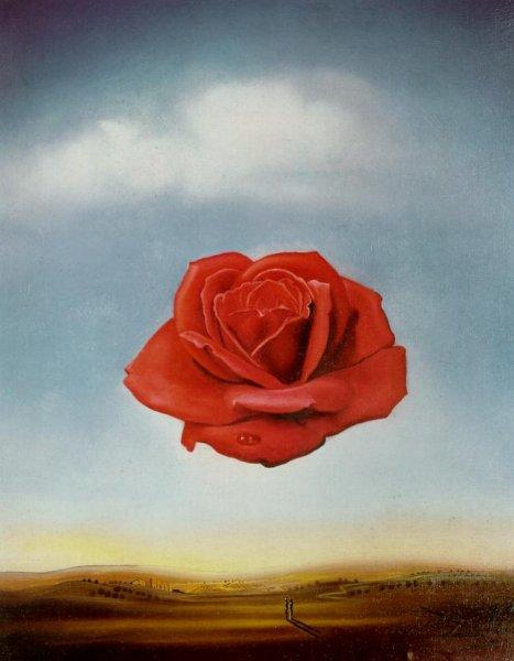 rosas en sueños