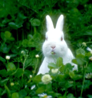 El conejo del amor