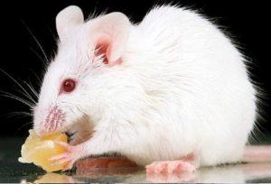 soñar con ratones colores