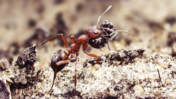 Soñar con hormigas ¿Qué significa y sus consecuencias?
