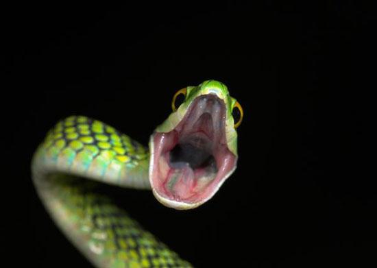 Sueños con serpientes significado